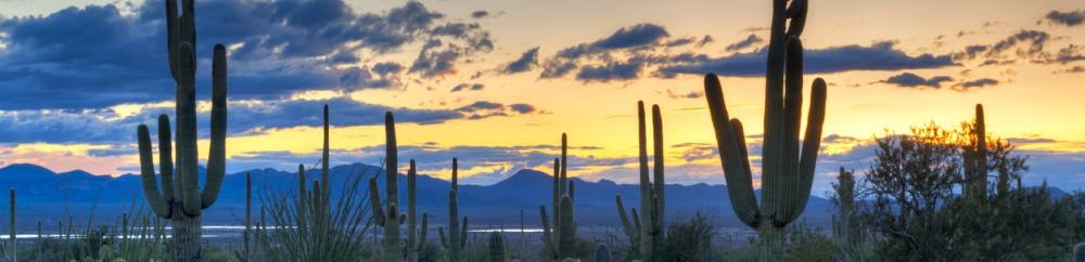 Cactus Landscape Cropped